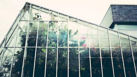 Väggen på ett växthus